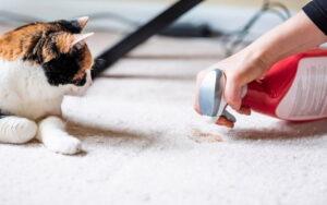 پاک کردن استفراغ حیوانات از روی فرش